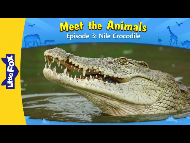 Meet the Animals 3 | Nile Crocodile | Wild Animals | Little Fox | Animated Stories for Kids