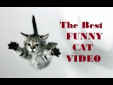 Funny Cats Compilation [Must See] Funny Cat Fail Videos Ever № 32 - Приколы с котами № 32