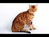 Кошка Раскраска онлайн, Рисуем Кошку раскрашиваем Кота раскраски для детей и малышей