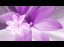 Футаж фиолетовый цветок
