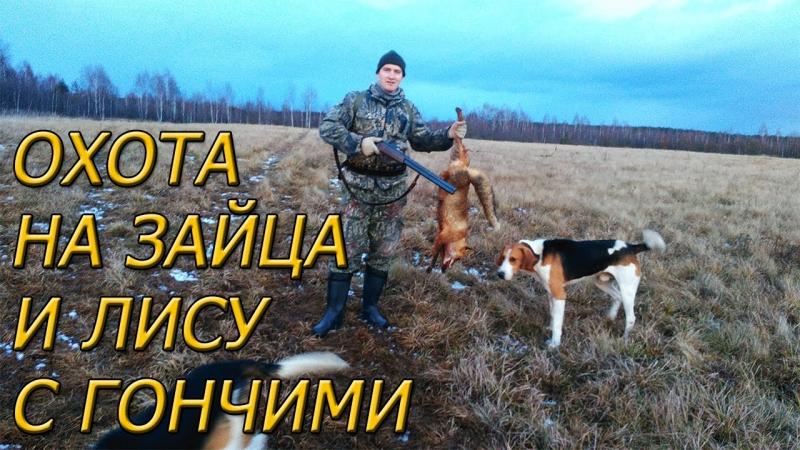 Охота на зайца и лису с гончими Одной меньше