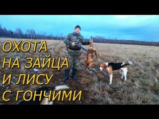 Охота на зайца и лису с гончими. Одной меньше
