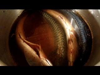 Рецепт копчения скумбрии. Приготовление в коптильне горячего копчения