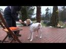 Как научить любую собаку апортировке, сочетание элементов игры и обучения