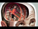 Гимнастика для мозга. Набор упражнений для развития памяти и внимания [Екатерина Додонова]