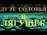 Сказочный Соловей и Хор Лягушек Live Nightingale &amp Frogs Singing