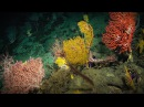 The secrets I find on the mysterious ocean floor | Laura Robinson