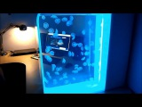 100 живых лунных медуз в потрясающем аквариуме с медузами Pulse 80!