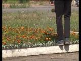 Колпашевские школьники участвуют в озеленении города, однако бродячие коровы вытаптывают клумбы