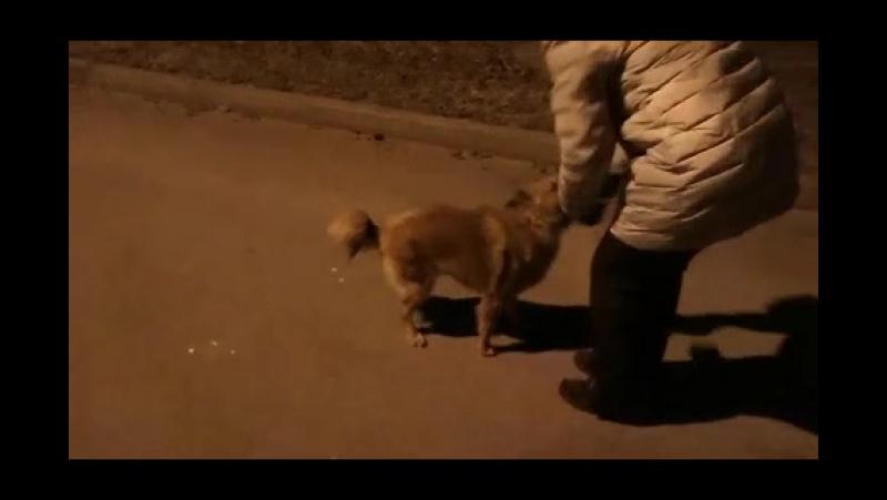 Первые прогулки Кирюшика по Эстонской земле :)