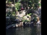 """Молодой человек показывает как надо прыгать со скалы в водопад, он местный парнишка, делает это для туристов."""""""