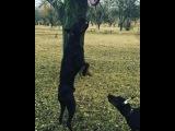 olesya_silaeva video