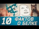 10 ФАКТОВ О БЕЛКЕ. Железный ТОП-5.