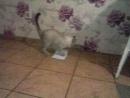 мой чистюля кот