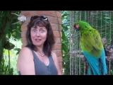 Женщина разговаривает с попугаем. Смешная женщина и попугай