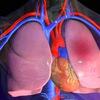 Анатомия человека ДонНМУ (Красный Лиман)