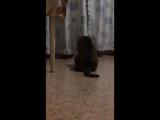 Мишка прячется от кота