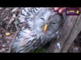 The funny owls going crzy    busssiness class compilation of pets and animals