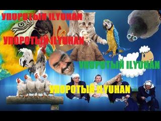ПЕТУХ VS ПОПУГАЙ Упоротый IlyuHan