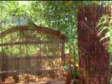 Живая изгородь и живые конструкции из ивы