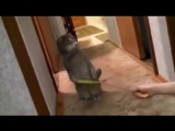 Смешная реакция кота на звонок