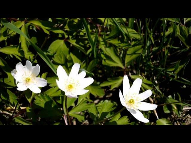 Весна. Звуки природы.