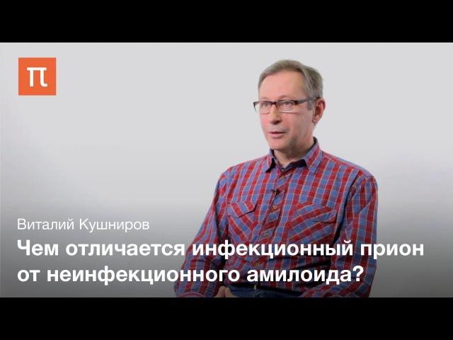 Структура прионов дрожжей - Виталий Кушниров