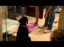 Как сделать туалет для щенка и как приучить к нему