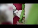 Котик в полной отключке