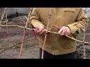 Заготовка и хранение черенков винограда. Опыт Якушенко В.Е.