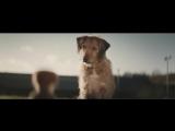 Собака - верный друг человека