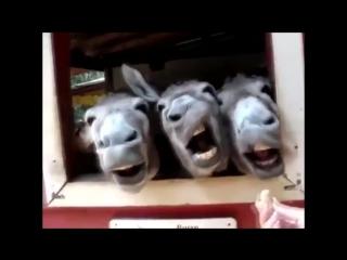 Ржачные приколы про животных. Крики животных
