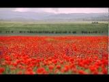 Красные Маки (музыка Юрия Антонова стихи Григория Поженяна)