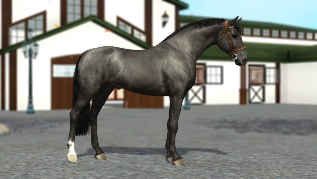 Регистрация лошадей в RHF 2 _ITrX3-S4VA