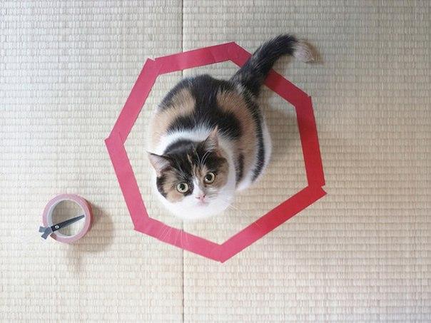 MC3mMzr5G0I «Поймай кота» — зачем?! sajt dizain prodvizhenie
