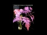 цветы 2- 3 февраля 2016 г. под музыку Глен_Миллер - Маленький цветок (танго). Picrolla