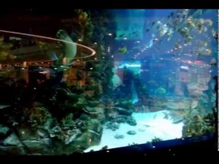 Огромнейший аквариум с миллионом красивейших рыб. Киев