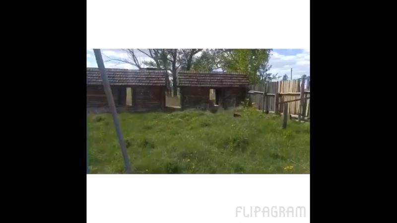 Боровлянка