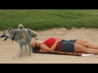 Лучшее видео про животных, самые смешные видео про животных подборка приколов  05
