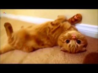 Cats love - Funny Cats 2016 | КОТЫ ПРИКОЛЫ 2016 - СМЕШНЫЕ КОТЫ 2016