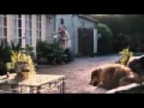 Я увижу тебя в своих снах (2015) — Иностранный трейлер [HD]