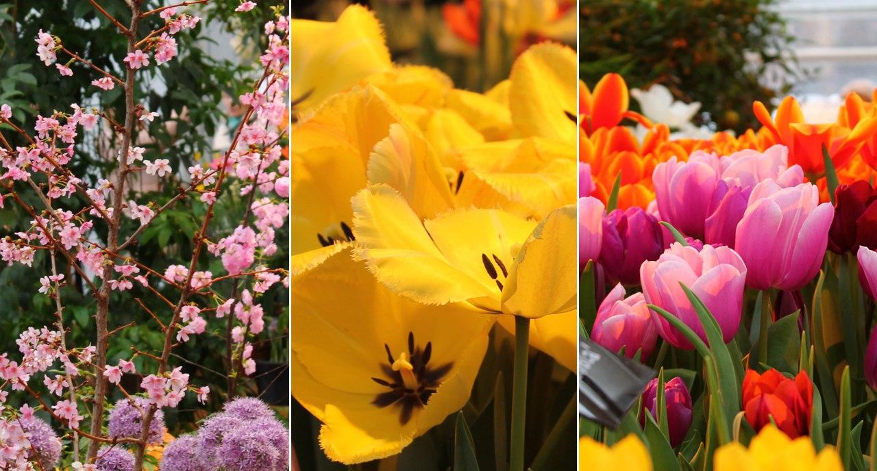 """Фотографии с """"Репетиции весны"""" в Аптекарском огороде. Как-то запланировано я туда попадаю х)"""