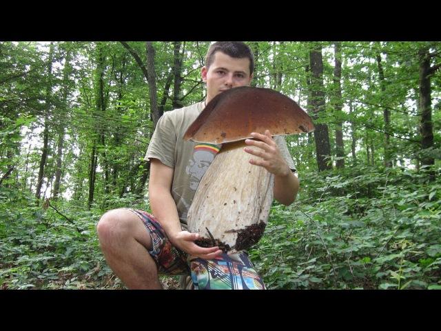Funghi porcini sorprendete 6