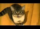 Классный смешной котенок! Приколы про котов! Прикольные животные!