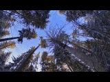 Прогулка по зимнему лесу. Следы невиданных зверей ))
