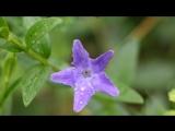 Весенние цветы))) под музыку музыка из кф - Счастье по рецепту. Picrolla