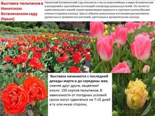 Поездка+в+Крым.pptx