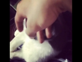 Мино и котик . И ... и ... голос Сон Мино 😍