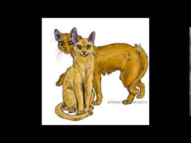 львиносвет коты воители