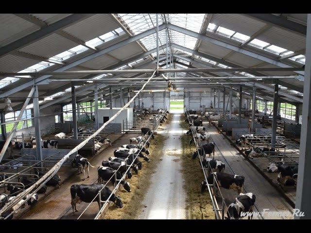 БГСХА.Ферма из металлоконструкций для основного стада молочного КРС